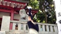 Écolières japonaise se poursuivent en mode Parkour Ninja! Dingue...