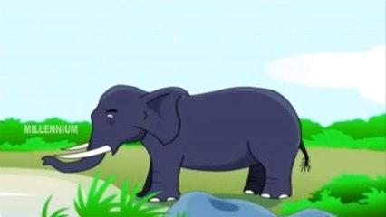 Animals | Chinnuvinte School | Kids Informative Animations