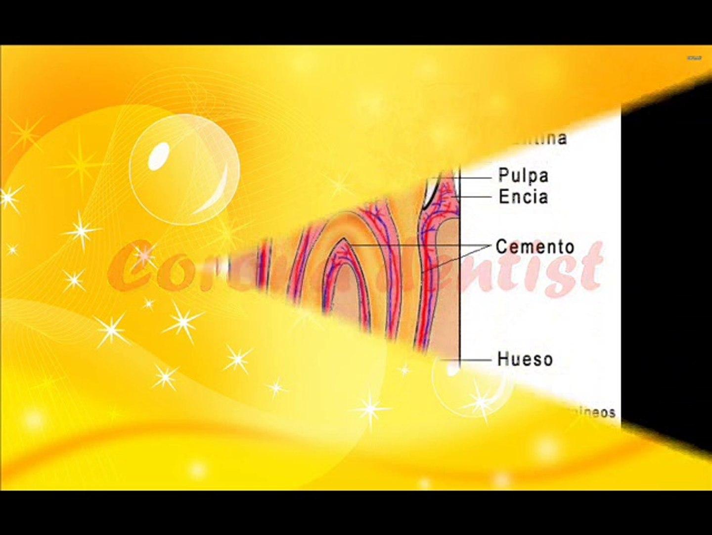 Best Corona Dental