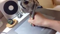 This Guy Tries To Draw But His Pet Owl Doesn't Give A FK & Just Sticks To Its Own Plans! HAHAHAHA