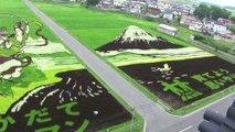 Des rizières transformées en tableaux géants au Japon