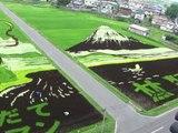 DES RIZIERES ET DES DESSINS - Au Japon, non loin de Inakadate, il existe des paysans artistes qui transforment leurs rizières en véritable oeuvres d'art. La preuve avec cette vidéo...