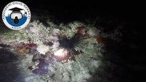 aquademi dalış merkezi ve okulu mersin silifke yesilovacık gece dalisi mersin