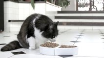 So funny Whiskas Commercial parody... poor little cat...