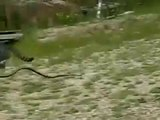 Snake vs Cat fight ........Deadly battle between cat and snake ...