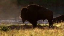World Deadliest Wild Animals Fighting - Deadliest Buffalo Fighting