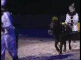 Cheval passion poney passion 2007