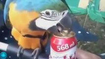 Funny Videos - Fail Compilation - Funny Pranks - Funny Vines - How to Open a Beer - Funny Fails 16
