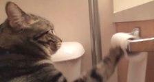 L'histoire d'amour entre un chat et un rouleau de papier toilette !