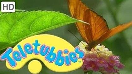 Teletubbies: Butterfly - HD