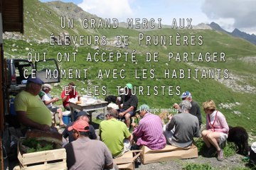 Prunières, commune des Hautes-Alpes - amontagnage des troupeaux, juin 2014