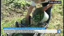 Rusia anunță un nou embargo pentru unele fructe și legume din Polonia. Anterior, au fost supuse restricţiilor fructele şi conservele din fructe şi legume de producţie moldovenească, dar şi vinurile şi apa minerală din Georgia.