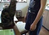 Funny Cat Demands Petting