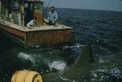 Bande-annonce : Les dents de la mer VOST