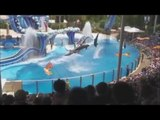 Fermer EngFranNedl dauphins en Europe, les delphinariums FERMEZ, Sluiter bis dauphins en Europe