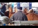 Foire aux chevaux de Maurs (15) le 07 mars 2013