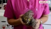 Bodrum'da yaralı baykuş tedaviye alındı -