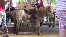 Stop aux manèges à poneys