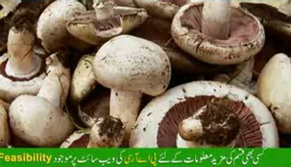 Mushroom Production and Processing