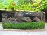 Come legare la Riccia Fluitans per creare un pratino in acquario - piante acquario tropicale