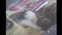 Funny Cat Videos Compilation Funny Cats Video Funny Animals funny cat vines cat vines 2014.