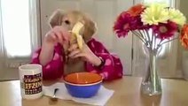 Human Dog Funny video clips and pranks, Funny Animals GAGS just for laughs!.