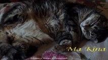 Mes Amis les Chats (Journée internationale du Chat)
