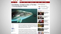 Mexican Cartels Are Selling Fish Bladders Now