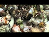 Living sea shells and crabs on the sea shore of Andaman & Nicobar Islands