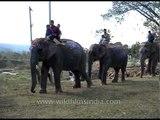 Elephant parade at Kaziranga Elephant Festival