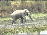 Water fun for Indian elephant in Pakke, Arunachal Pradesh