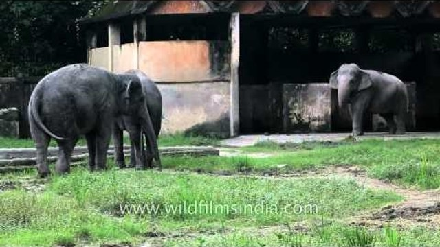 Elephants at an Indian zoo: not ideal
