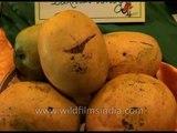 Humongous mangos on display at the Mango festival