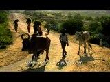Make hay while the sun shines - Rural women carrying hay home, Uttar Pradesh