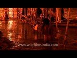 Naga Sadhus take a dip at Ganges at Kumbh Mela