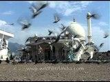 Pigeons gathering at the front-yard of Jama Masjid, Srinagar