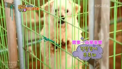 KBS 家族的誕生 A-pink  20120121 EP11