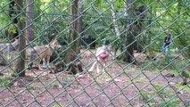 11 10 2014 parc Nocturia le repas des loups