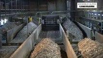 Environnement : au coeur du Centre de compostage de Murianette