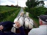 Balade dans le Nord avec des chevaux Boulonnais