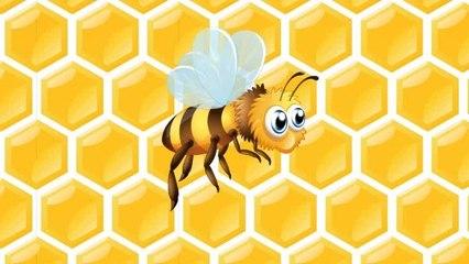 Arı Vız Vız Vız - Çocuk Şarkısı
