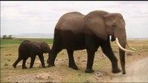 Afrique, Le secret de la puissance de l'odorat des éléphants révélé par des chercheurs