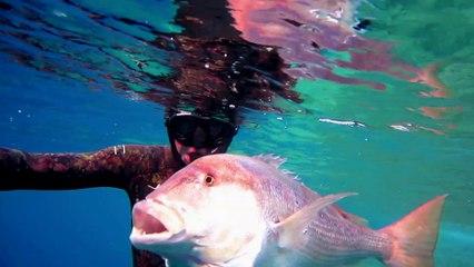 Chasse sous-marine : Denti, l'intelligence faite poisson [bande annonce]