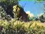 Tarzan (full) ft Ron Ely opening titles