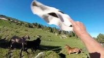 Traversée de 3 troupeaux de chevaux et mules en liberté