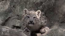 Viral Video Recap: Baby Snow Leopards and Facts About Marsupials