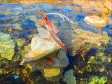 art brut en Suisse -Les Indiens-lac leman a Cully