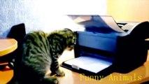 CHATS débiles et marrants : compilation de moments fun avec nos amis les chats!