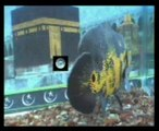 Name of Allah And Prophet Muhammad SAWW on Fish
