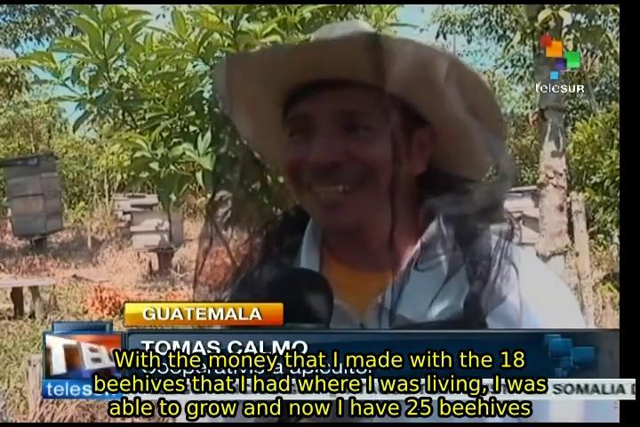 """""""Monsanto Law"""" endangers beekeeping: Guatemalan beekeepers"""